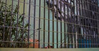 """""""UMA CABRA"""" …a San Pietro: il celebre artista Bordalo II per Forgotten Project"""